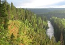 Какая судьба ждет лесной массив Двинско-Пинежского междуречья