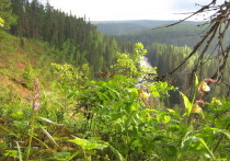 Сохранение Двинско-Пинежского лесного массива официально названо приоритетным проектом региона