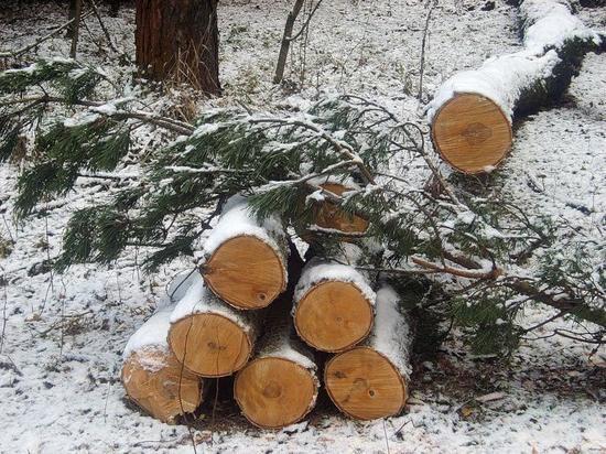 Холмогорских браконьеров осудили условно и оштрафовали на 300 тысяч